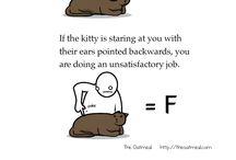 Cats & Hello Kitty