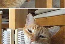 Macskának