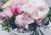 Peony bouquets/ Buchete cu bujori / Floriștii Magnolia creează buchete cu bujori pentru toate ocaziile. Sunt perfecte pentru persoanele romantice si delicate.