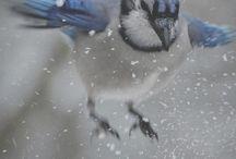 birds / by Ellie K