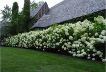 Hedge / Inspirations for our new hedge