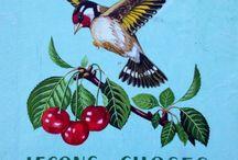 Oiseaux / oiseaux