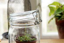 Kitchen_grow_greens