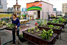 Urban agriculture - rooftops