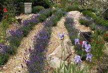 Garden ideas / Designs, layouts, colours & etc