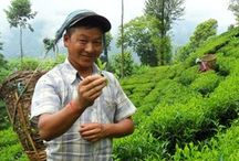 Splendid Nepal / Get inspired by off the beaten track activities with local people. From homestays to farmstays and trekkings to food tours. All are created by local people.