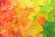 SEASONS:   ....AUTUMN............ / ART &  Nature -  Fall Leaves, projects, pictures, ideas..........