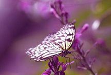 borboletas do mundo