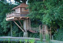 Tree Houses & Backyard