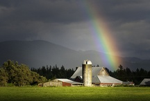rainbow / regenboog