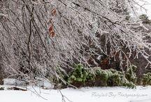 Arkansas Ice Storm Dec 6 2013 / Photographs of today's ice storm in Fairfield Bay, Arkansas.