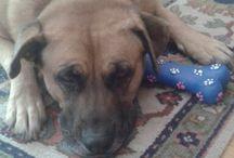 my dog sara / sara