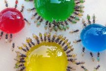 Insects (and Arachnids) Galore / by Chelsea Gould