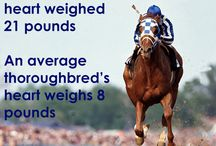 Fun Horse Facts All Around / Horses horses and more horses! what do you know about them?