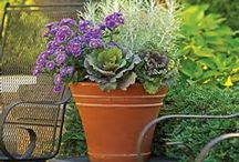 Fall Containers / Gardening