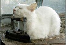 Charming Kitties, Oh My!