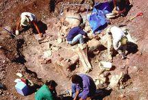 utgravninger
