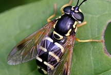 Insect / Entimologia