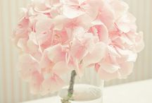 Jodie & Paul / wedding flower suggestions