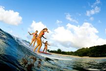 SURFING IS LOVE / by KaTie McFarland