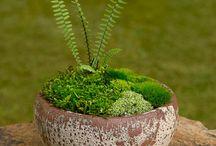 Zahrada / okrasná zahrada