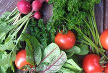 Grüße aus dem Gemüsebeet - berlingarten / Salate und Gemüse, ganz frische Genüsse, ruck-zuck im Küchengarten selber ernten: Salat, Kartoffeln, Kräuter, Erbsen, Bohnen, Kohl, Möhren und vieles mehr
