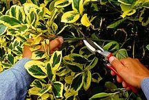 Növények szaporítása