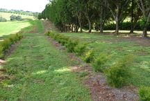 Our Plantation / Our very own plantation with some very new and different essential oils