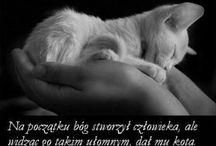 """Małe jest piękne... ;) / """" Zdobyć przyjaźń kota nie jest rzeczą łatwą. Nie lokuje on swych uczuć nierozważnie.. może zostać Twoim przyjacielem.. jeśli jesteś tego godny,ale nigdy Twoim niewolnikiem..""""    Theophile Gauthier"""