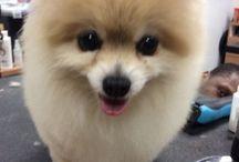Hunden♡