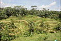 Bali / Mucho más que playas paradisiacas... #bali