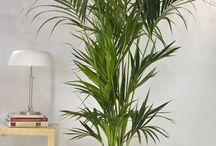 palm iç bahçe