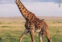 safari / personagens