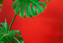 aesthetics red green