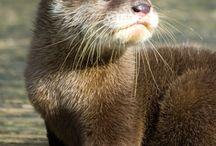 Otter <3