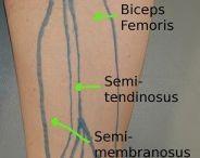Pelvis-Leg