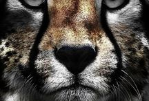 Big Cats / I just love these animals