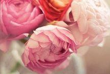 La Fleur / by Emily Thompson