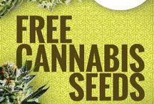 CANAPALANDIA / Canapalandia, è uno store di articoli a base di canapa, semi di cannabis, CBD oil, moda e accessori, vaporizzatori per erbe medicinali.
