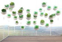 KOKEDAMA / Bacheca dedicata alle foto di kokedama... le piante volanti!