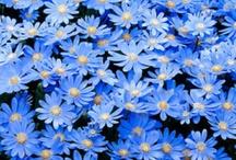 True Blue / by Fanny Zara