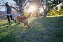Health & Wellness Dog Tips