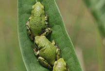 Amphibians, Lizards, Snakes etc / On land and water, a small part of our wonderous world
