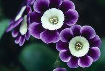 arrangement fleur exterieur