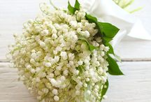 Lily of the Valley season / April is the ideal month for fans of Lily of the Valley.