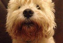 Pes Knof