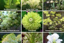 цветы, огород