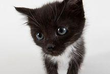 Søte katter / Søte