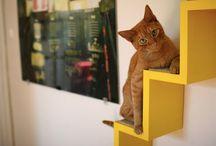Home Decor - Cat Ideas! / Cat related home decor ideas