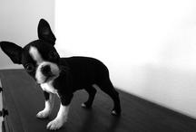 Pet Stuff / by Amy Harris